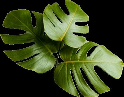 LeafyBoy