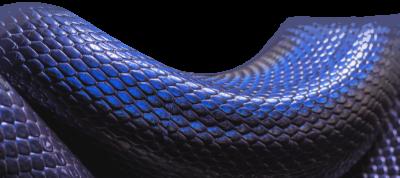 Snake (6)