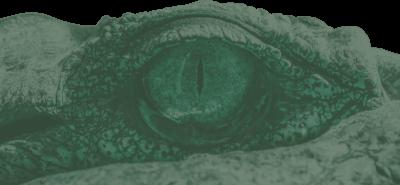 CrocGreen (3)