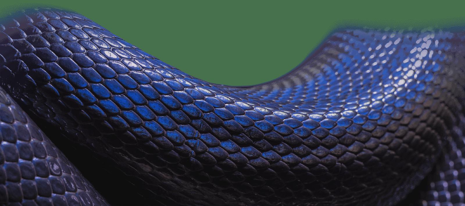 Snake (7)