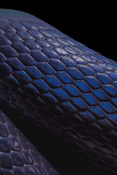 Snake (8)