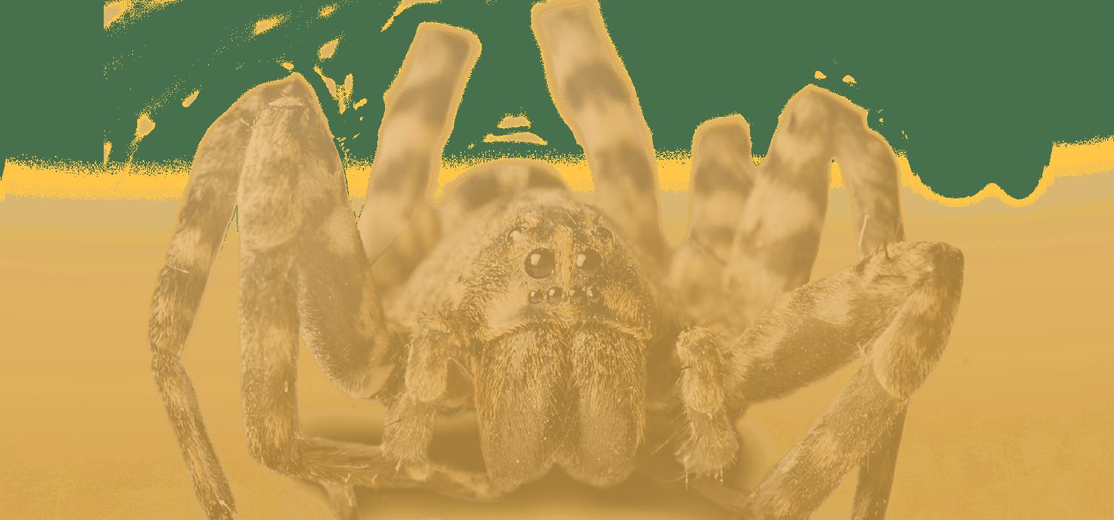 SpiderDessert (3)