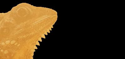 Iguana (3)