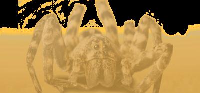 SpiderDessert (1)